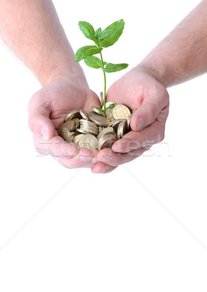 Handen geld groei hoop munten Stockfoto © hyrons