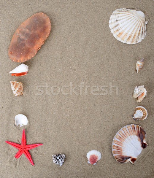 Tengerparti homok kagylók tenger háttér keret homok Stock fotó © hyrons