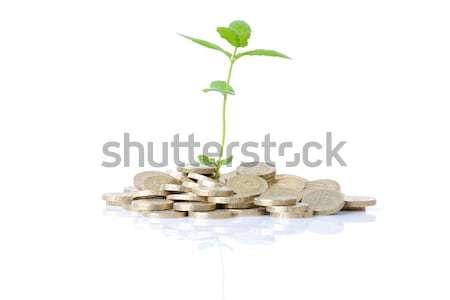Stok fotoğraf: Büyüme · madeni · para · yeni · para · bitki · büyüyen