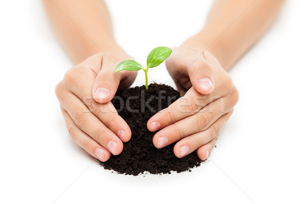 Human hand holding green sprout leaf growth at dirt soil Stock photo © ia_64