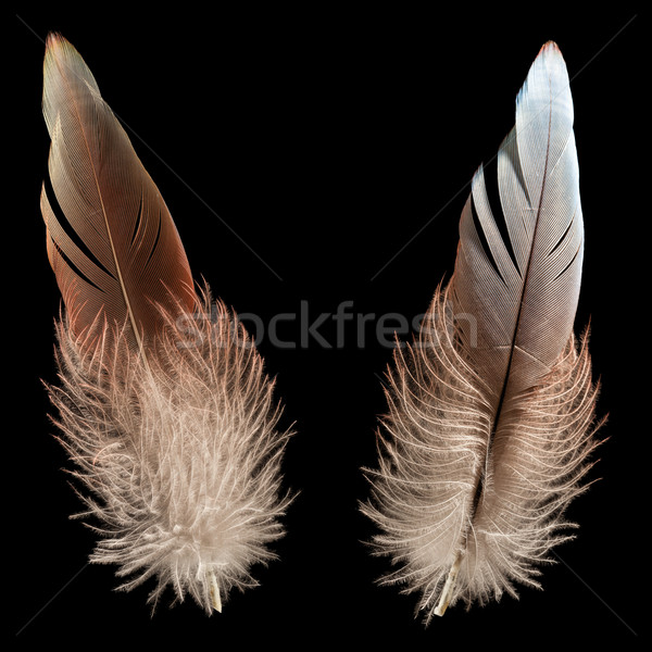 Bird feather or quill Stock photo © ia_64