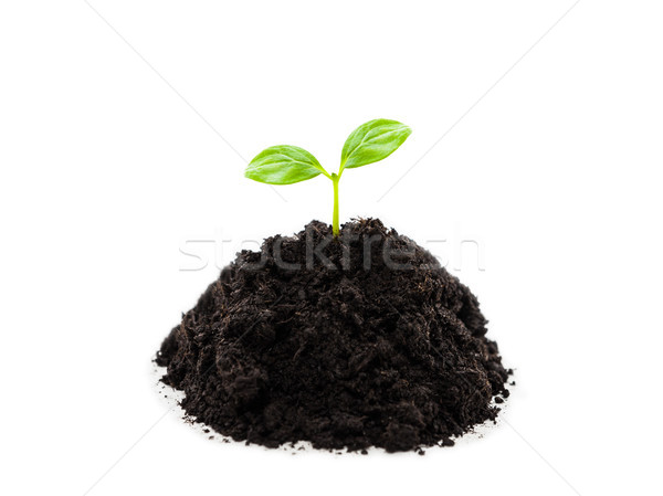 Small green plant sprout leaf growth at dirt soil heap Stock photo © ia_64