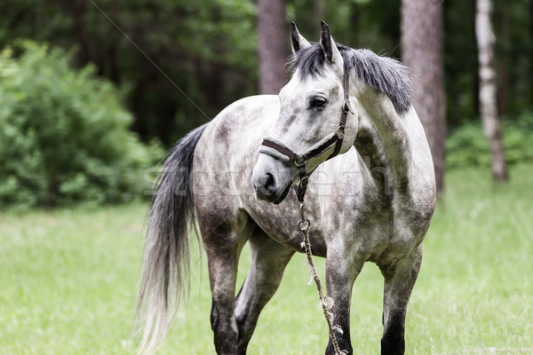 Horse pasture Stock photo © ia_64