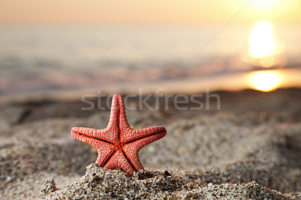 Starfish on sea sand beach Stock photo © ia_64