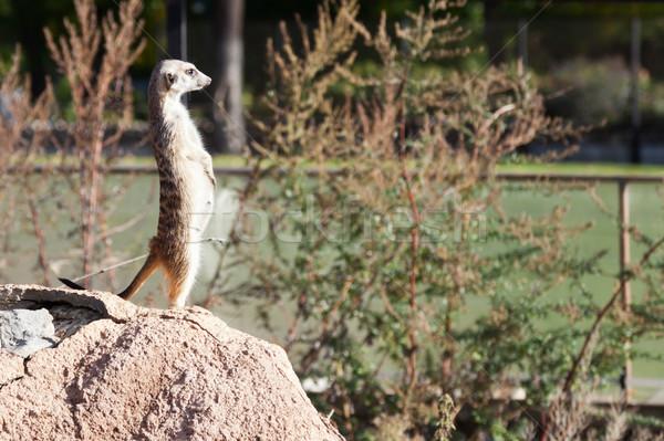 Animal animais selvagens natureza bonitinho deserto Foto stock © ia_64