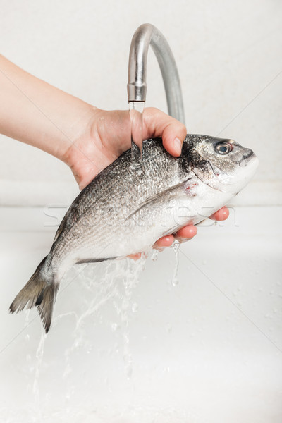 Hand holding gilthead fish food Stock photo © ia_64