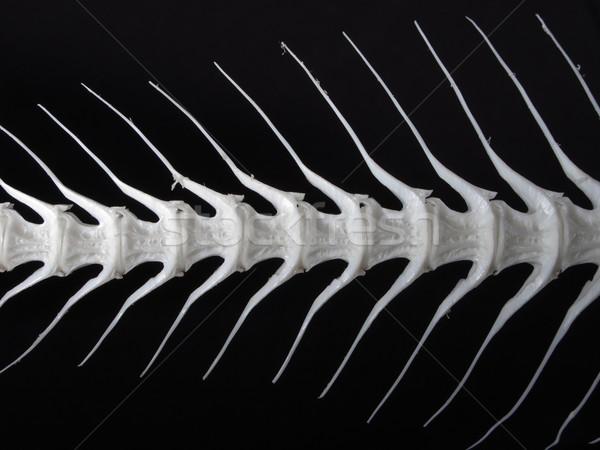 Sea fish white bone Stock photo © ia_64