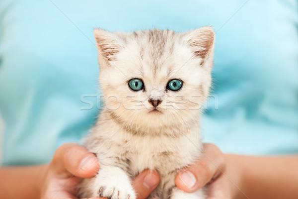 人間 手 猫 英国の ストックフォト © ia_64