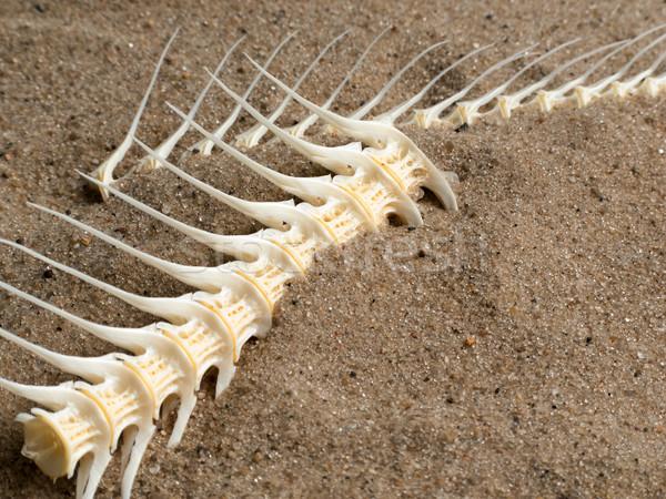 Hal csont tenger fehér közelkép tengerpart Stock fotó © ia_64