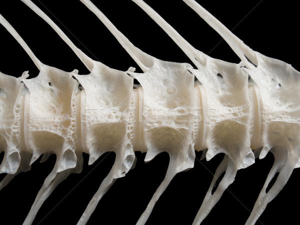 Tenger hal fehér csont közelkép étel Stock fotó © ia_64