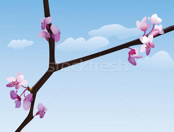 Virágzó ág kék ég virág természet szépség Stock fotó © iaRada