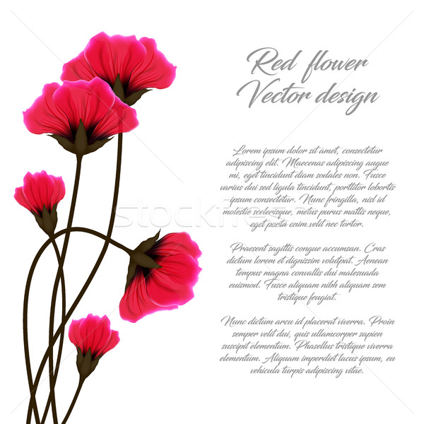 Vector red flower illustration isolated on white background. Poppies greeting card or invitation Stock photo © Iaroslava