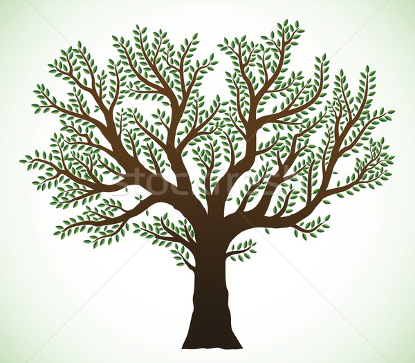 Boom illustratie gedetailleerd groene bladeren voorjaar ontwerp Stockfoto © icefront