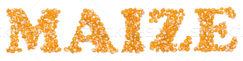 Maize script made of seeds Stock photo © icefront