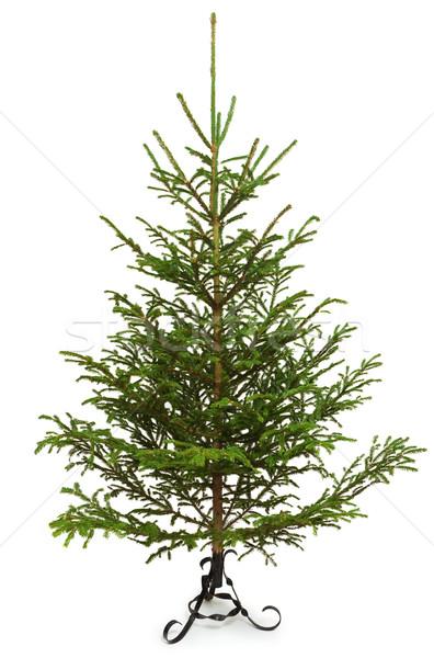 Christmas tree Stock photo © icefront