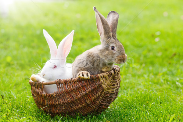 Two rabbits in wicker basket Stock photo © icefront