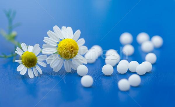Homeopáticos camomila flor azul superfície Foto stock © icefront