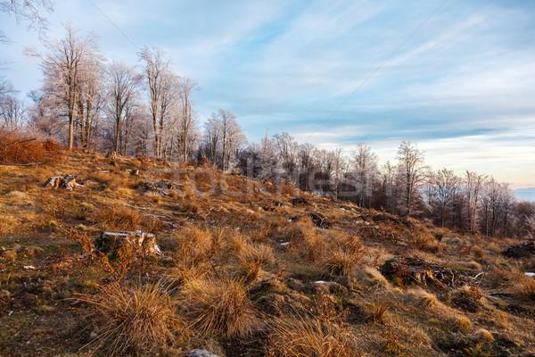 Roumanie détruit forêt haut colline arbre Photo stock © icefront