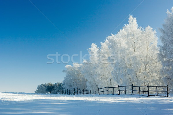 Winter landscape and trees Stock photo © icefront