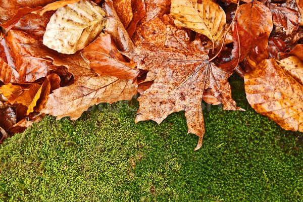 Umido fogliame arrugginito foglie verde muschio Foto d'archivio © icefront