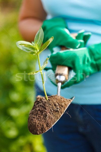 Plant in earth on a small spade Stock photo © icefront
