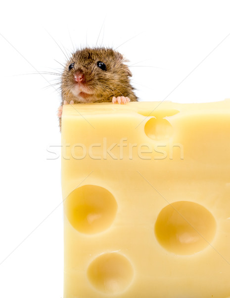Casa ratón detrás queso cerca vista Foto stock © icefront