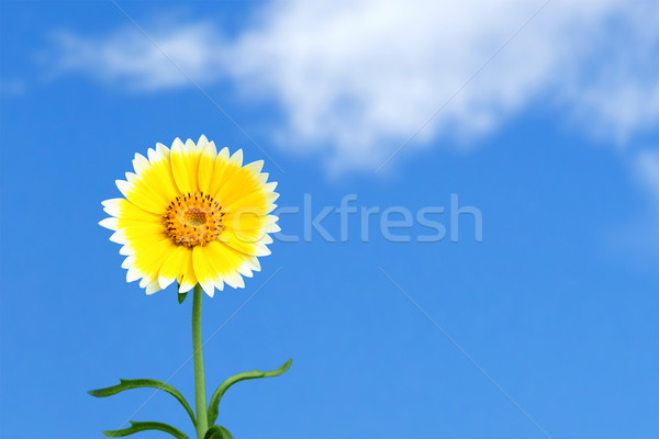A beautiful day Stock photo © icefront