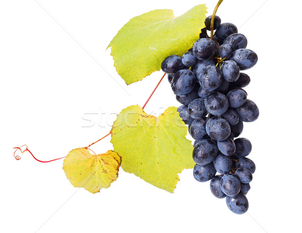 Single blue grape cluster with leaves Stock photo © icefront