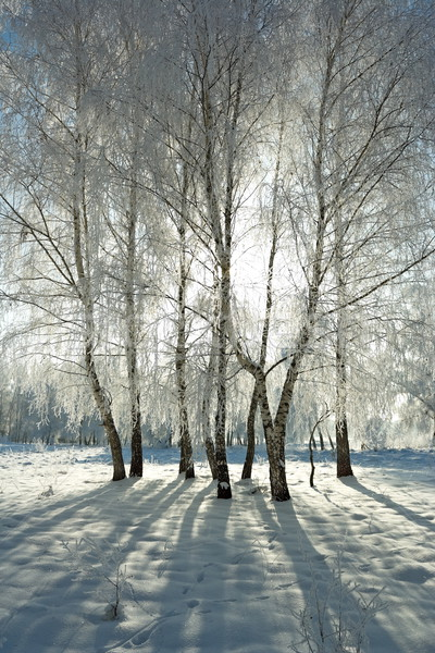 Winter bos koud dag mooie rijm Stockfoto © icefront