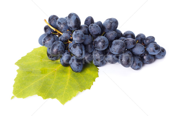 Single blue grape cluster on leaf Stock photo © icefront