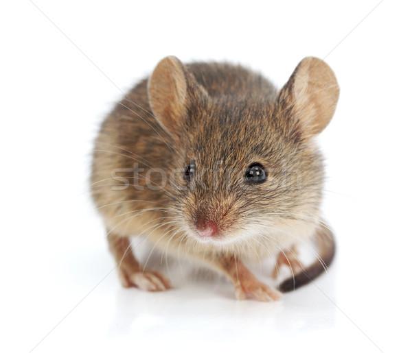 дома мыши тесные мнение крошечный волос Сток-фото © icefront