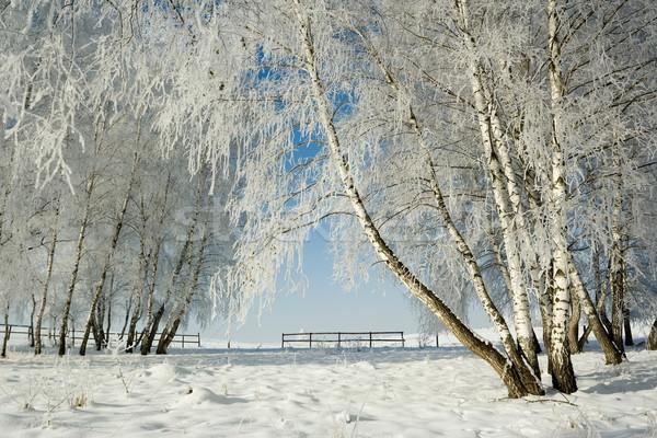 Winter landschap bomen koud dag mooie Stockfoto © icefront