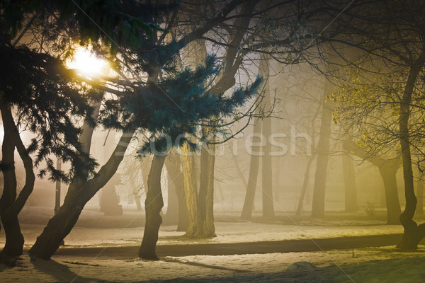 Foggy night in park Stock photo © icefront