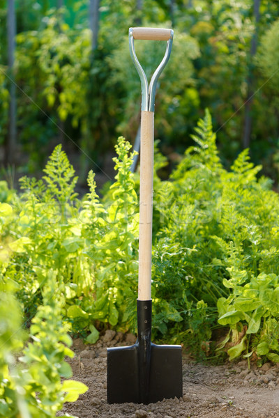 Spade in soil Stock photo © icefront