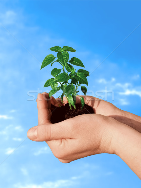 Plant in hand Stock photo © icefront