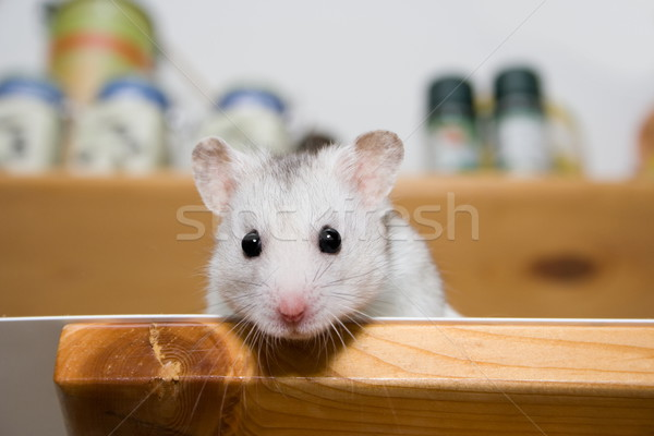 Hamster in larder Stock photo © icefront