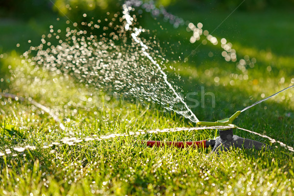Irrigation of green grass Stock photo © icefront