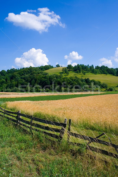 Zomer platteland heuvel zomertijd gras Stockfoto © icefront