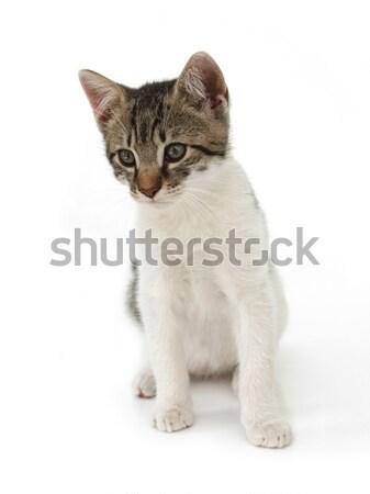 Cat kid Stock photo © icefront