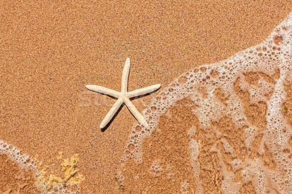 Bianco starfish sabbia piccolo acqua natura Foto d'archivio © icefront