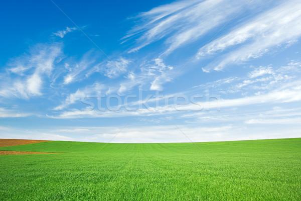 Verde campo de trigo cielo azul frescos azul nublado Foto stock © icefront