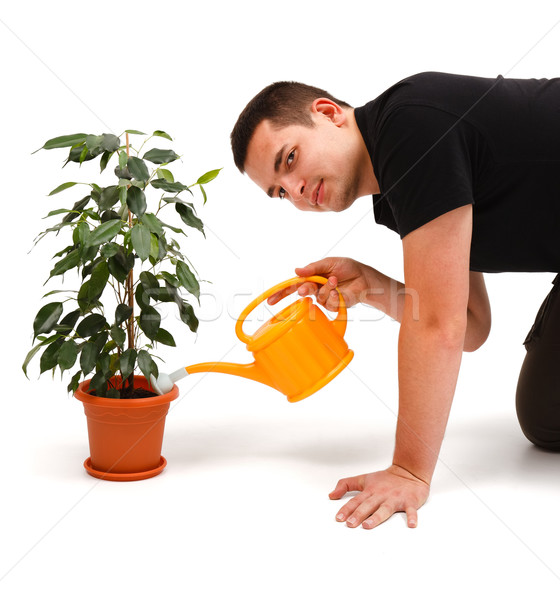 Young man watering flower Stock photo © icefront