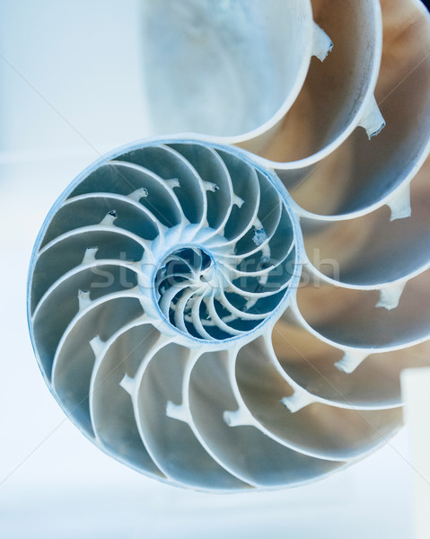 Taglio via shell azzurro sfondo bellezza Foto d'archivio © ifeelstock