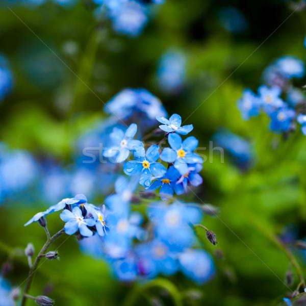 小 青 花 午前 庭園 テクスチャ ストックフォト © ifeelstock
