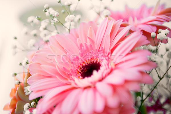 Pink gerber flower  Stock photo © ifeelstock