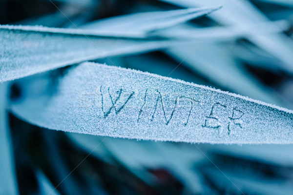 Winter written on frozen  Stock photo © ifeelstock