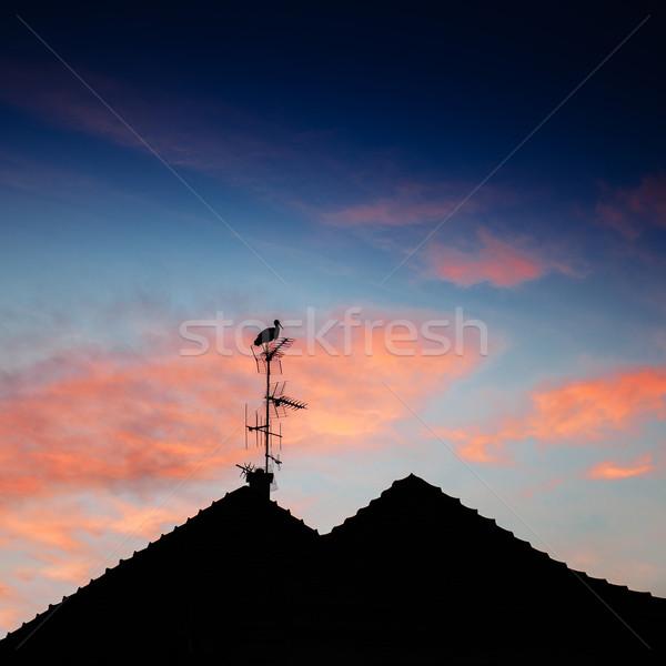 Stork silhouette standing on roof Stock photo © ifeelstock