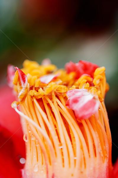Fiore macro shot bella struttura Foto d'archivio © ifeelstock