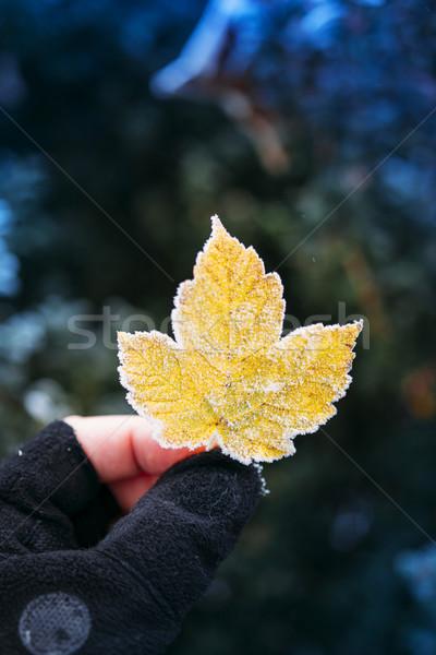 Frozen yellow leaf in adventure man hand Stock photo © ifeelstock
