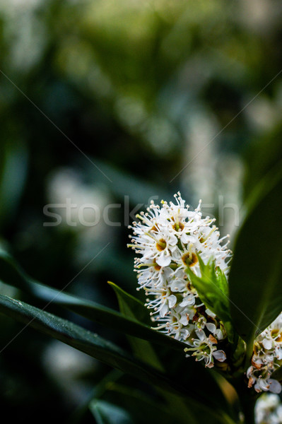 Field of wild flowers  Stock photo © ifeelstock